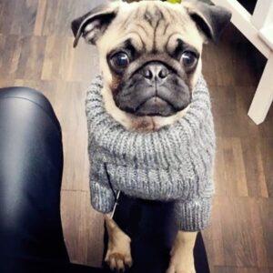 cable sweater torso ecru von milk und pepper