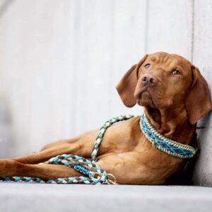 hundehalsband bahamas