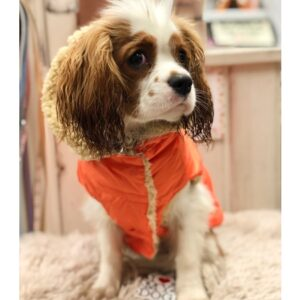 regenveste i love my dog orange