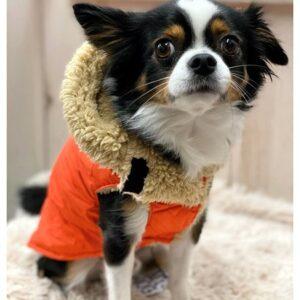 regenveste i love my dog red