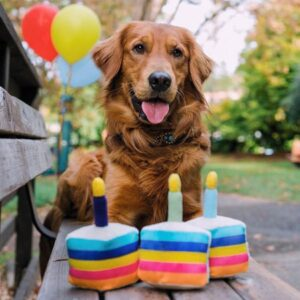 funny hundeparty toys