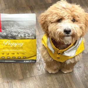 hunde regenveste first gelb
