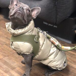 daunen jacke von i love my dog goldenbeige