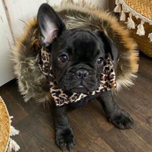 daunen veste luxury black von i love my dog