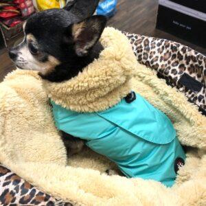 regenveste i love my dog mint
