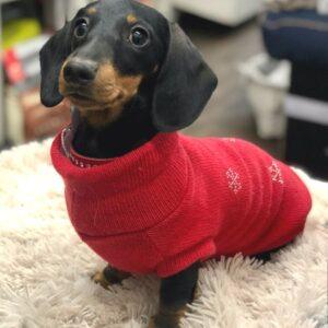cashmere sweater mit kristall red