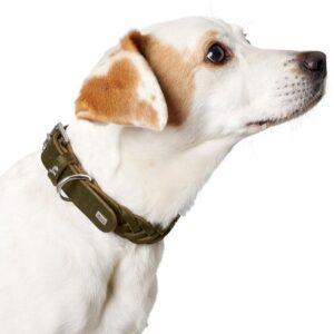 hunter hundehalsband solid olivegrün