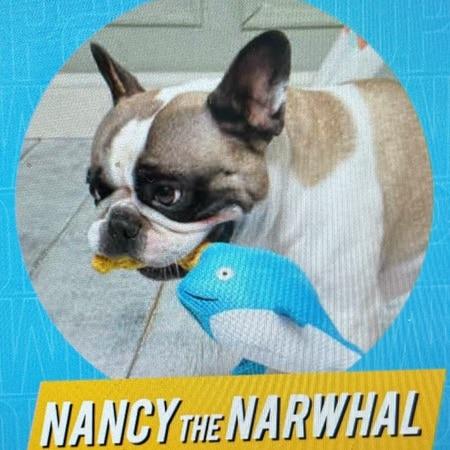 nancy der wahlfisch