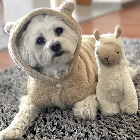 hoodie teddy in love beige