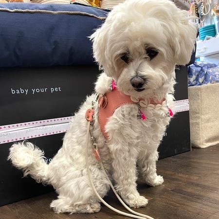 hundeharness kite luxury soft lachs rosa