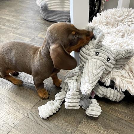 emil der elefant