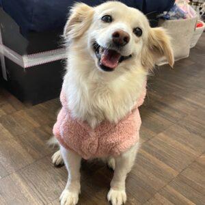 hoodie teddy in love rosa