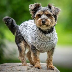 hundepullover alva grau